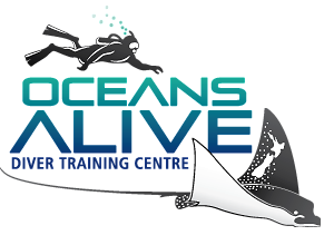 Oceans Alive New Zealand Ltd - Dive Training and Dive Shop